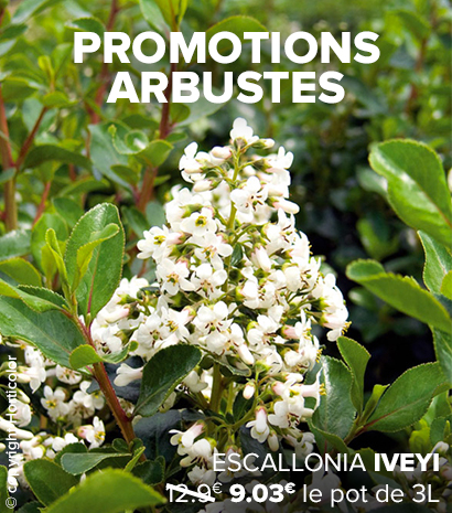 promotions-arbustes